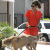 Eva Mendes Walking Ryan Gosling&#039;s Dog in LA