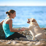 5 Tips For Correcting or Training a Pet