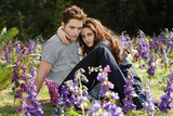 Bella and Edward get close in their meadow in Breaking Dawn Part 2.