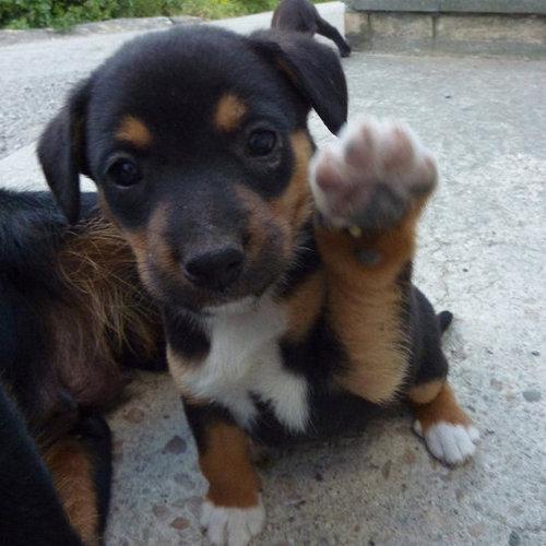 Hello, Hello!