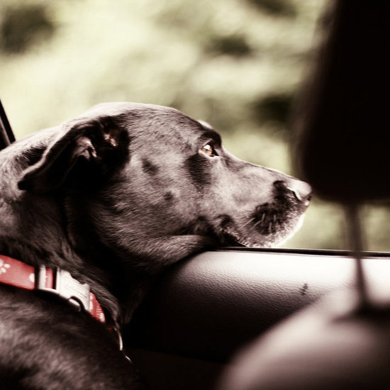 Auto-Matic: What to Pack For Road Trips With Your Pet