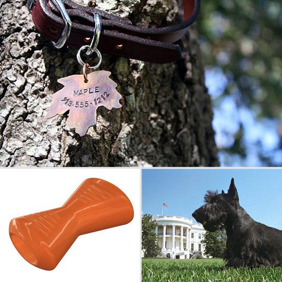 Prep Your Pup For Fall With PetSugar's September Mutt Haves