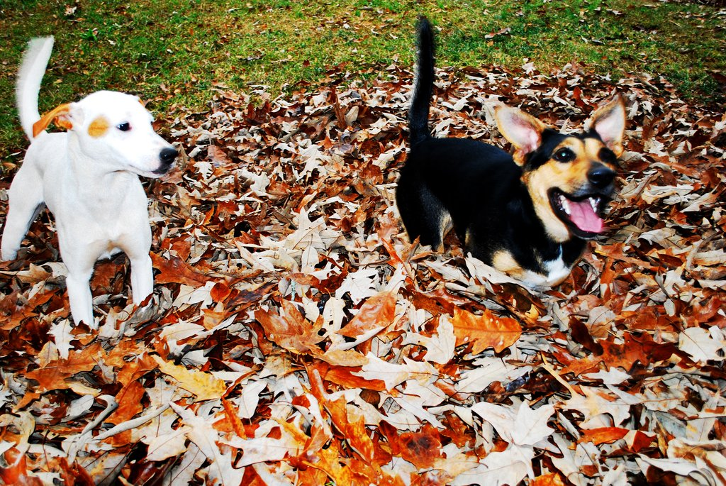 Hey, I thought this was MY leaf pile! Source: Flickr user B Rosen