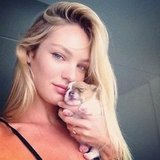 Candice Swanepoel posed with one of her newborn pups. Source: Instagram user angelcandices