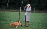 The queen paused for a photo op with her pups in Windsor Park in 1960.