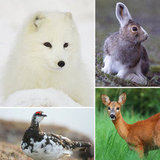 Costume Change: Animals Whose Colors Adapt With the Seasons