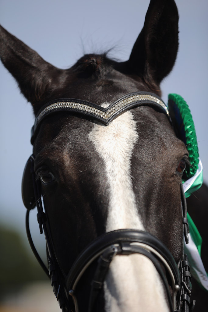 A little bling in your bridle never hurts.