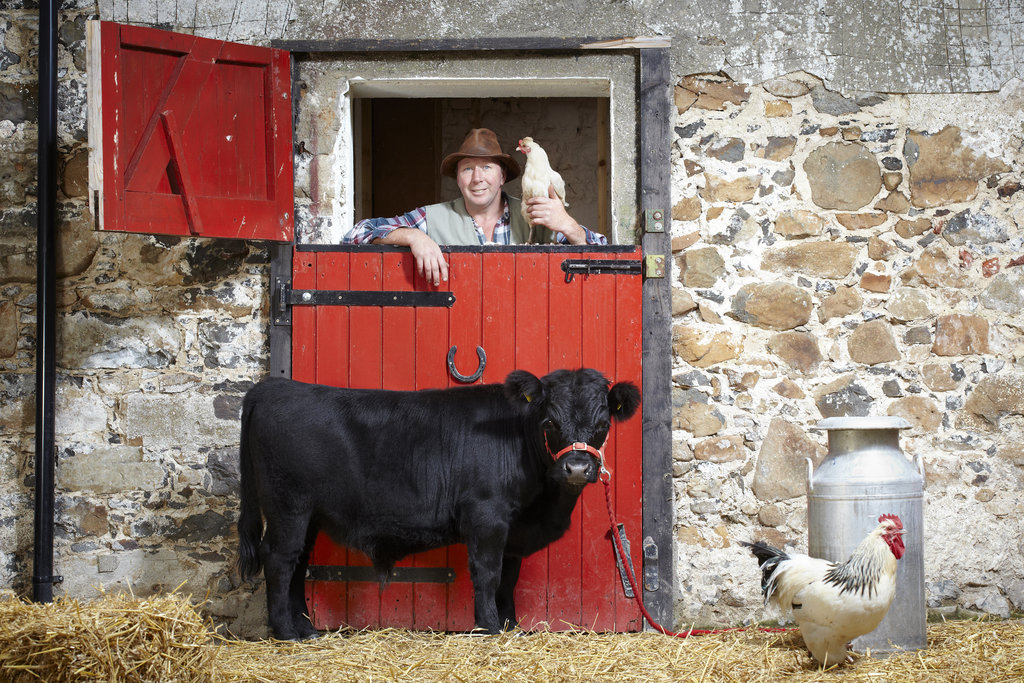 Archie: The Shortest Bull