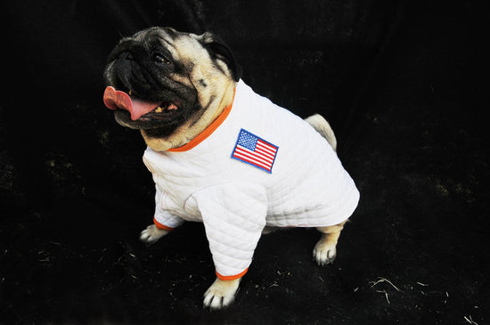 This pug is a real moonwalker!