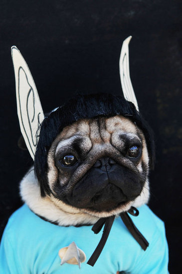This pug's message from the skies: live long and prosper!
