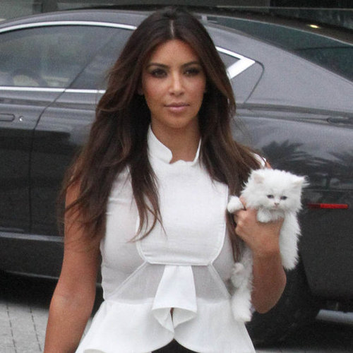 Kim Kardashian Mercy Persian Kitten Pictures
