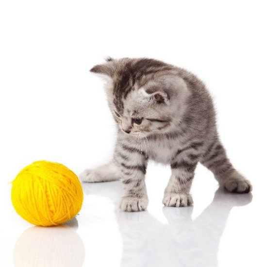 Bringing Home Baby: A New-Kitten Checklist