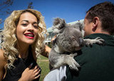 Rita Ora got up close and personal with a koala at Taronga Zoo. Source: Twitter user RitaOra