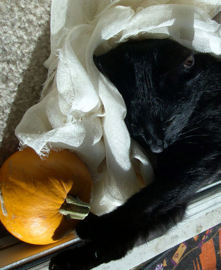 Nap time wouldn't be the same without a pumpkin to cuddle. Source: Flickr user weeta