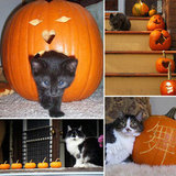 Kitties Squash the Great Pumpkin Debate