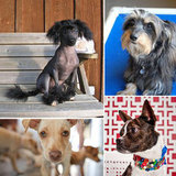 Looking For Love: 10 Adoptable Tiny Tots