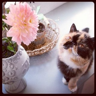 List of Best Cats on Instagram