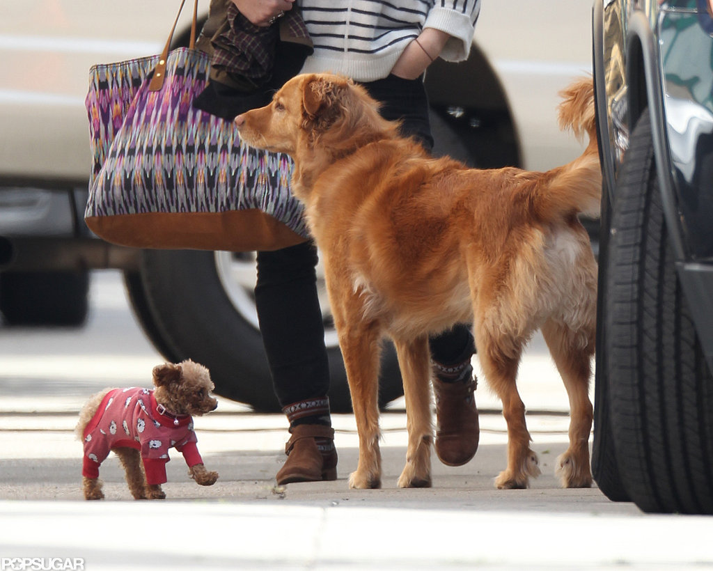 Blake Lively and Ryan Reynolds's dogs, Penny and Baxter, hung out on the Gossip Girl set.