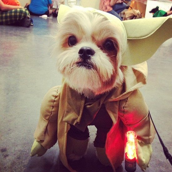 The Web's A-Google With These Top 10 Pet Costumes