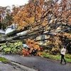 Fashion People&#039;s Pictures of Hurricane Sandy