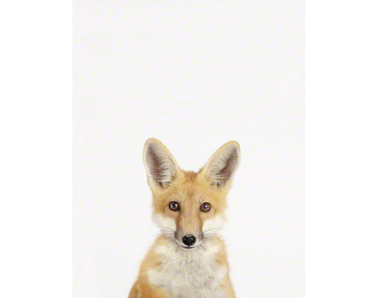 This adorable Baby Fox Close-Up ($25) portrait shouldn't be for nurseries only. Try adding a patterned mat for a sophisticated edge.