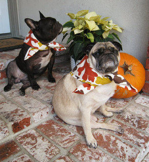 Thanksgiving Leftover Treats For Your Dog