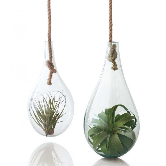 Not everyone can have their own indoor greenhouse, but a terrarium ($69-$89) is the next best thing.