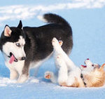 Animals Playing in the Snow (Pictures)