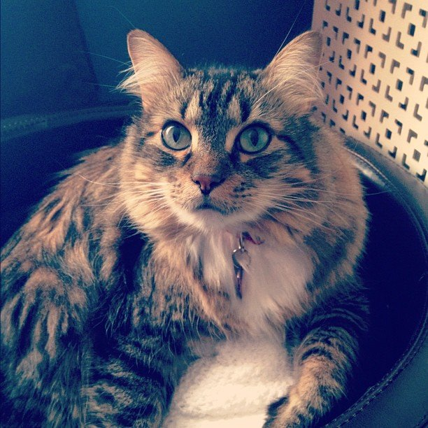 Senior Account Executive Céline van Riemsdijk has a Maine Coon kitty named Philippe who, according to her, has a 'tude.