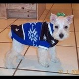 BellaSugar Reporter Kirbie Johnson dressed her Schnauzer-Poodle mix, Toby, in stylish and warm Winter gear.