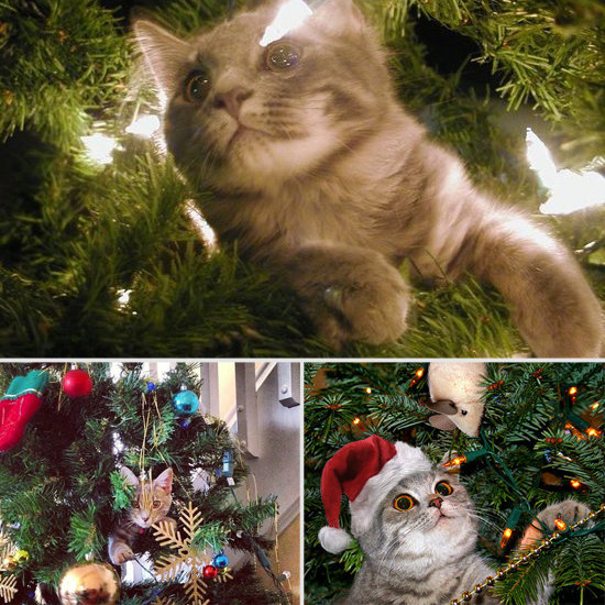Holiday Cheer: Pets Stuck in Christmas Trees