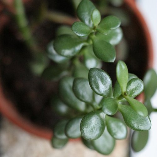 Easy, Low-Maintenance Houseplants