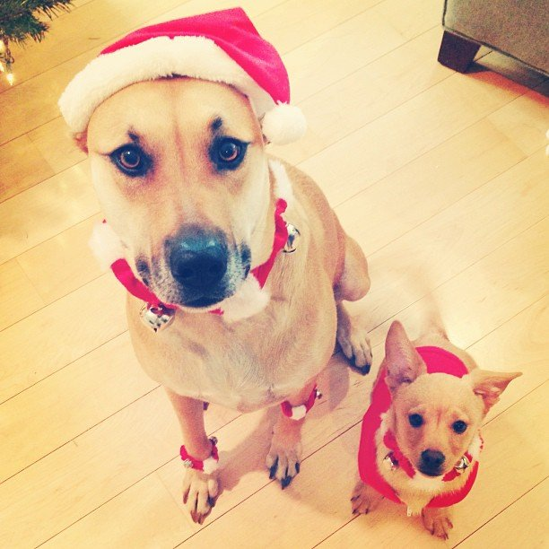 Lauren Conrad dressed her dogs up for Christmas. Source: Instagram user laurenconrad