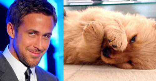 It's a battle of cuteness on the Is Ryan Gosling Cuter Than a Puppy? site.