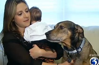 Dog Helps Save Nine-Week-Old Baby (VIDEO)