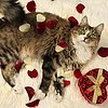 Valentine&#039;s Day Gift Ideas For Pets
