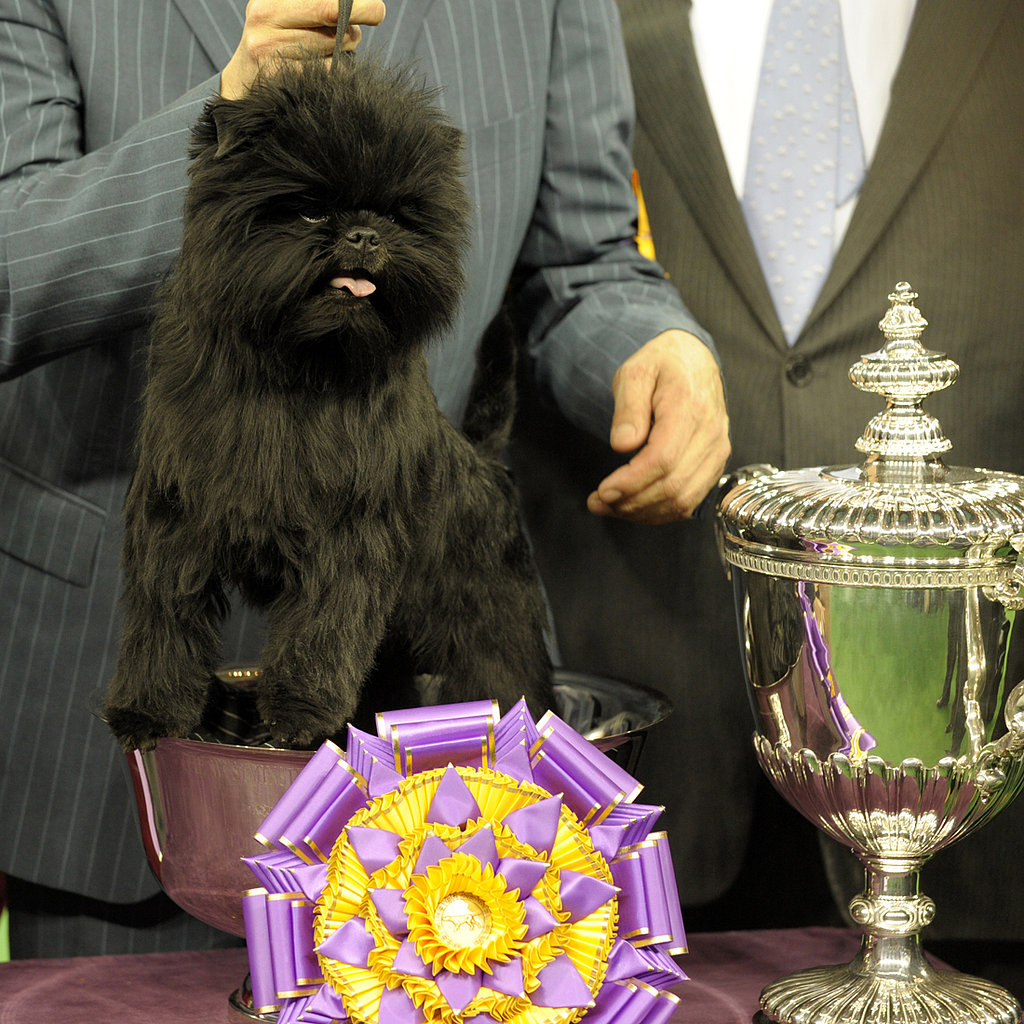 Top Dog: Banana Joe Wins Westminster