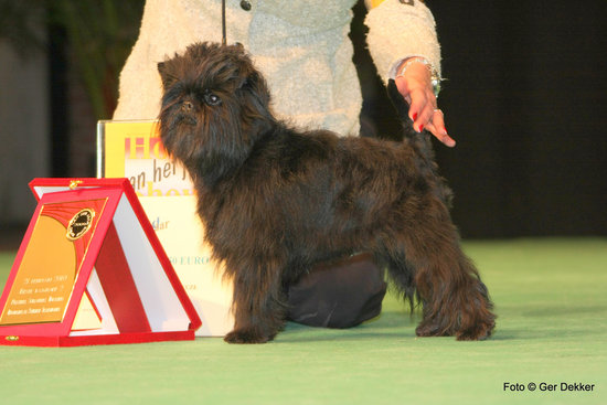 Another affenpinscher at a dog show. Looks like another winner to me! Source: Flickr user Ger Dekke