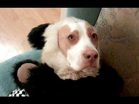 The Ultimate Dog Shaming Video