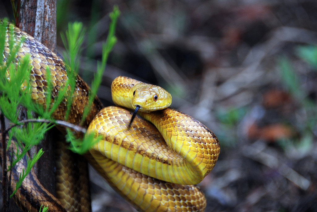 Slither, Slither: 2013 Is the Year of the Snake