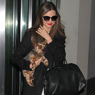 Miranda Kerr With Her Dog Frankie in NYC | Pictures
