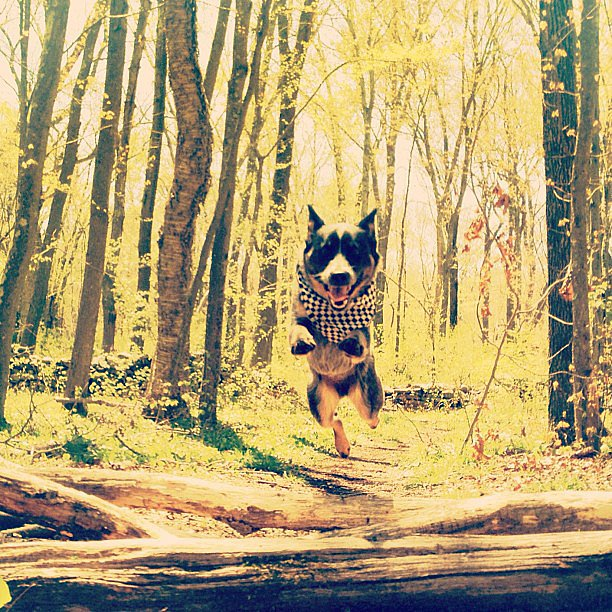 Dogs Jump For Joy! Spring Is Around the Corner