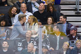 Dax Shepard and Kristen Bell sat with Alyssa Milano and her husband, David Bugliari, at a hockey game in LA.