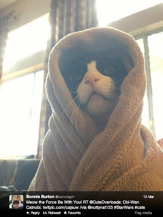 Bonnie Burton, host of the Star Wars web show, welcomes Obi Wan Catnobi to the Internet.