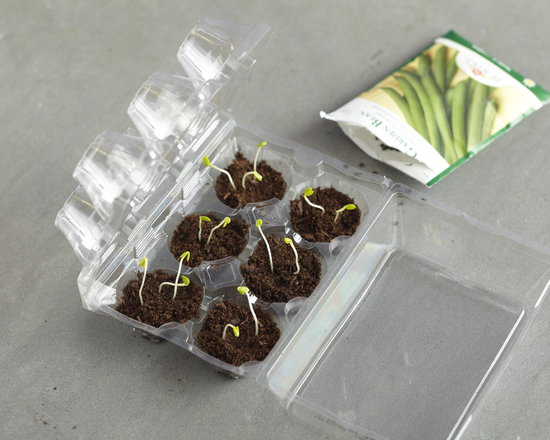 Plastic Egg Carton Mini Greenhouse