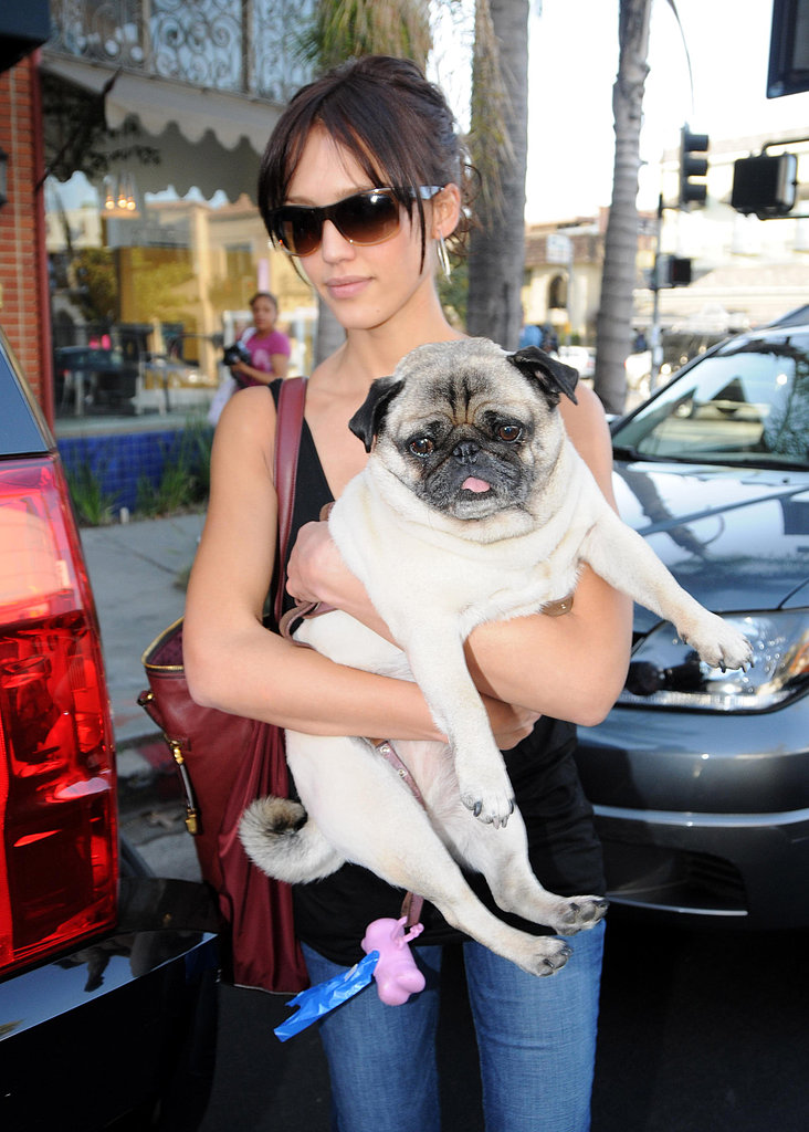 Jessica Alba and her Pug, Sid, ran errands together in LA in September 2009.