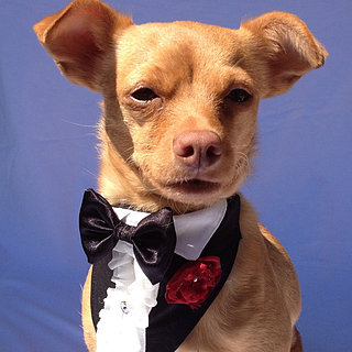 Pet Wedding Attire