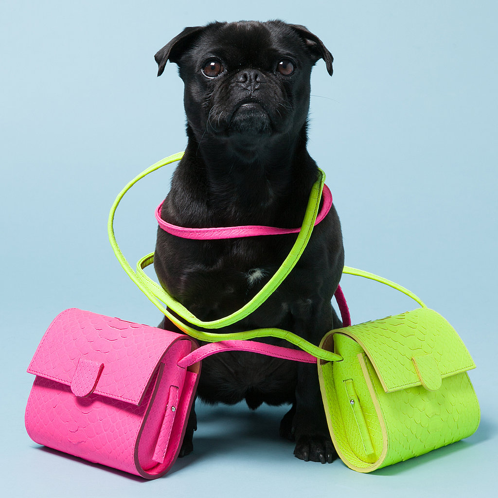 Avenue32 Enlists Four-Legged Friends For Adorable Accessories Shoot