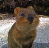 What Is a Quokka?