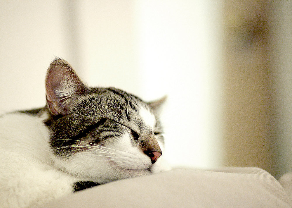 Another happy cat. Source: Flickr user angeloangelo